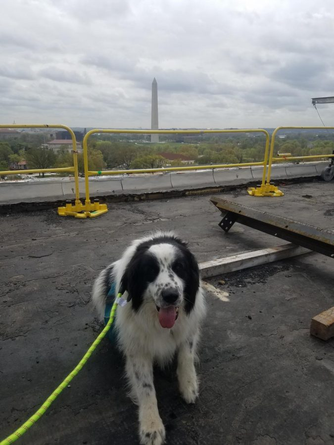 Milo poses in front of the Washington Monument.