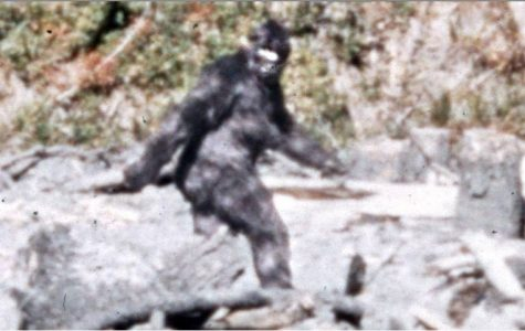 Still image of Bigfoot footage - Patterson 1967